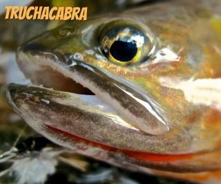 Truchacabra