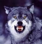Snarlingwolf